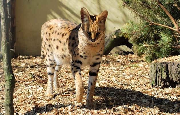 Зоопарки на карантине: как проходит жизнь у животных и скучают ли они по посетителям (ФОТО) - фото №2