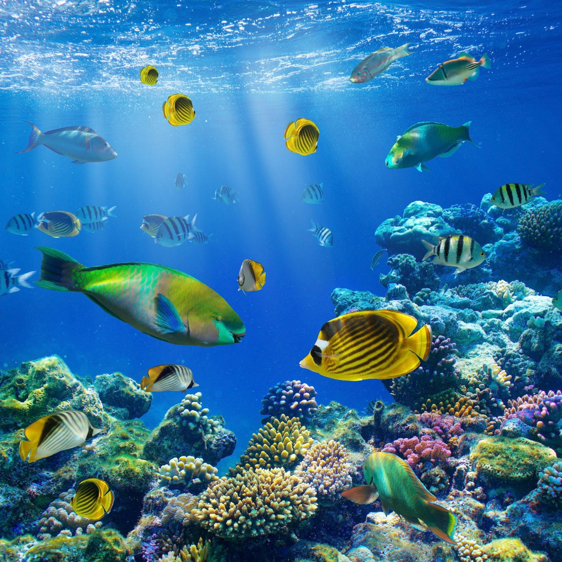 Всемирный день океанов: подборка самых ярких фото - фото №1