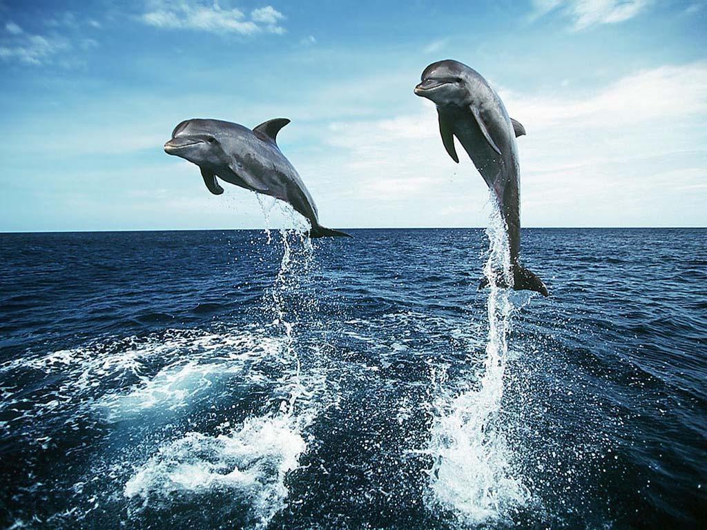 Всемирный день океанов: подборка самых ярких фото - фото №8