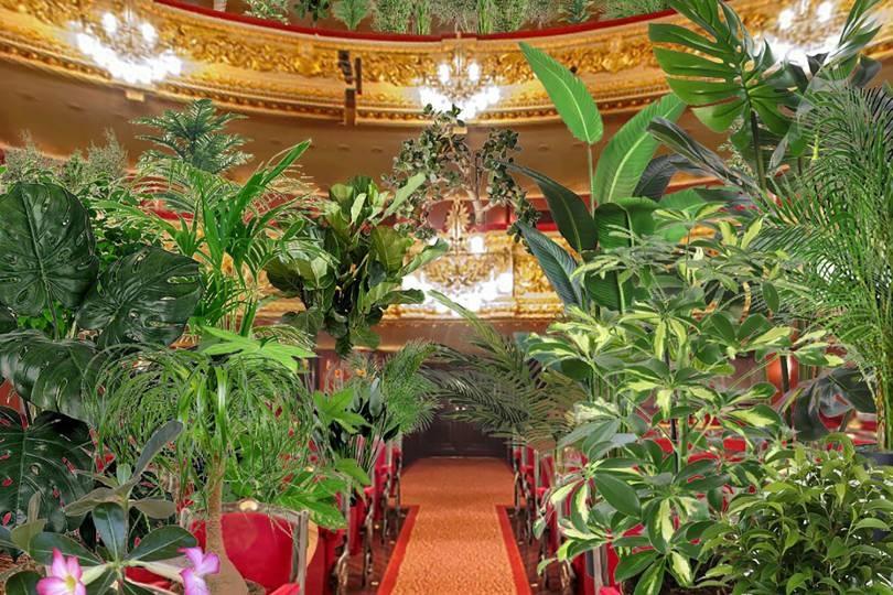 Оперный театр в Барселоне дал концерт для комнатных растений (ВИДЕО+ФОТО) - фото №1