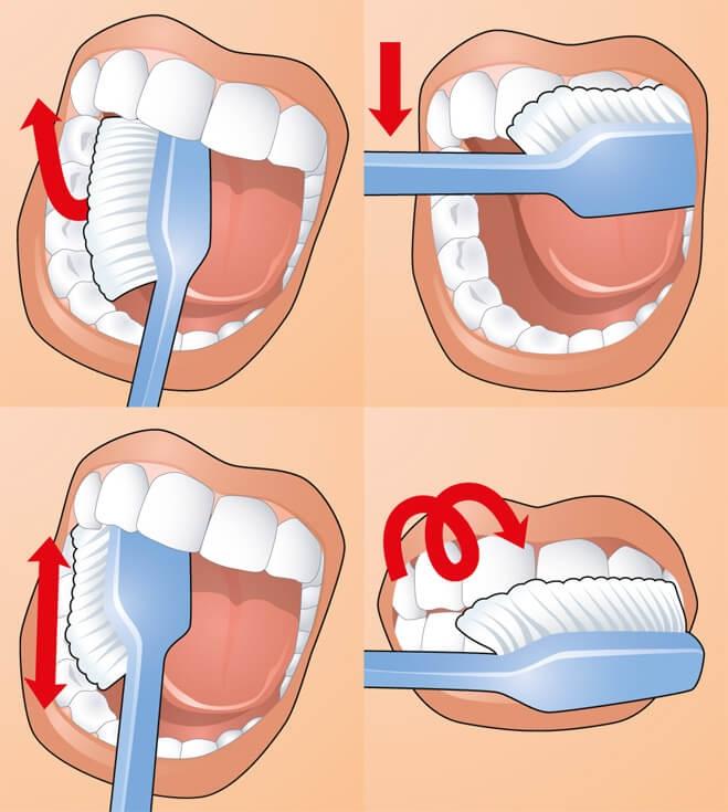 Как правильно чистить зубы: учимся ухаживать за ротовой полостью - фото №1
