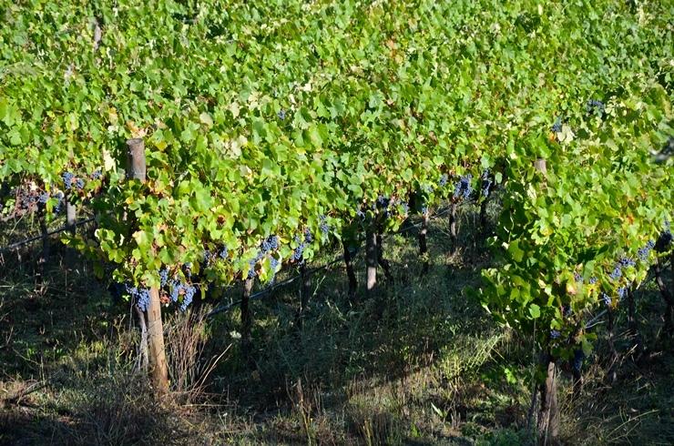 Винная дипломатия: в Украине впервые пройдет Wines of Portugal Grand Tasting 2021 - фото №2