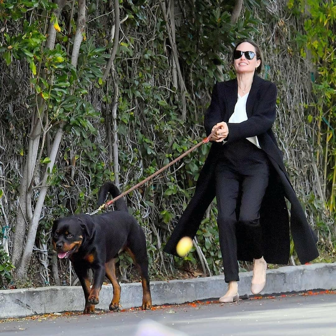"""""""Кто кого выгуливает?"""": новые фото Анджелины Джоли вызвали осуждения поклонников - фото №4"""