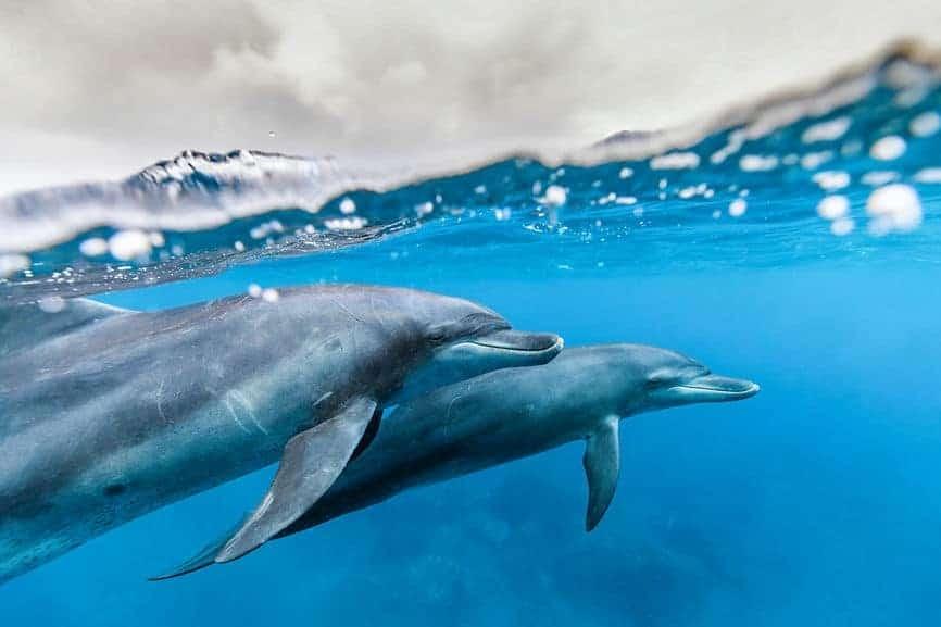 Всемирный день океанов: подборка самых ярких фото - фото №6