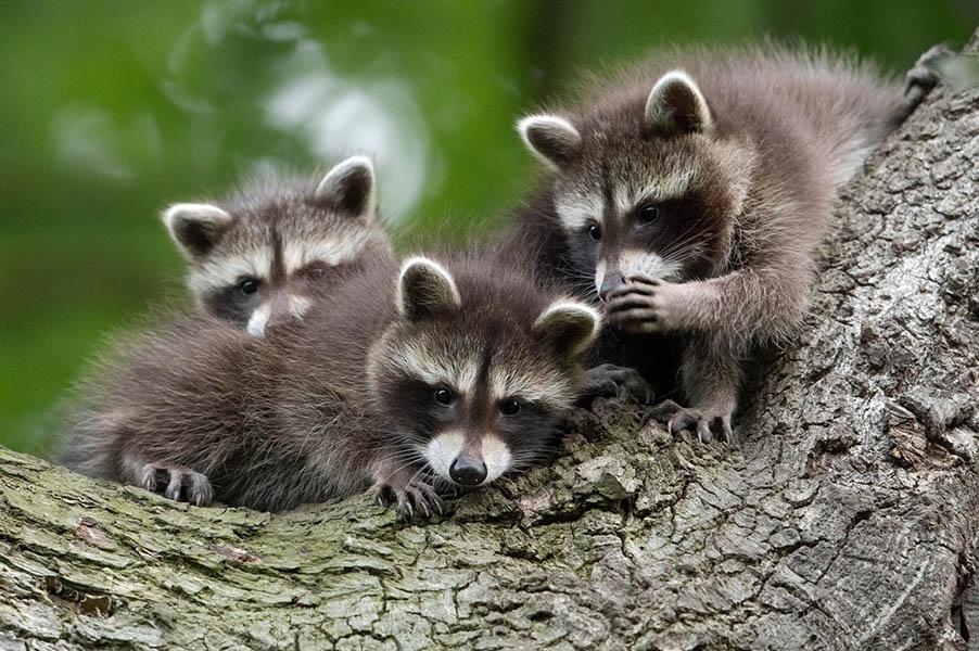 Comedy Wildlife Photography Awards опубликовала самые комичные фото животных - фото №3