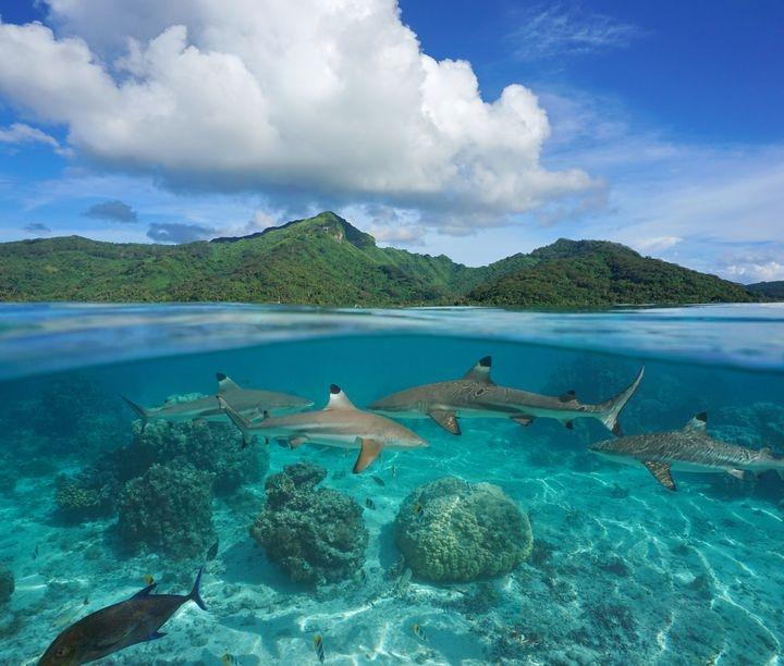 Всемирный день океанов: подборка самых ярких фото - фото №5
