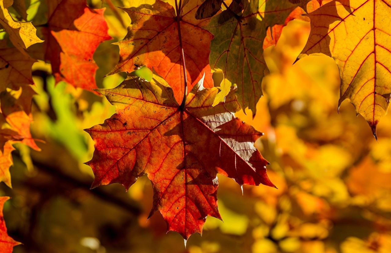 какой сегодня праздник 31 октября