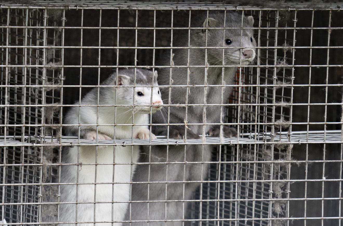 В Финляндии начали разработку вакцины против коронавируса для животных - фото №2