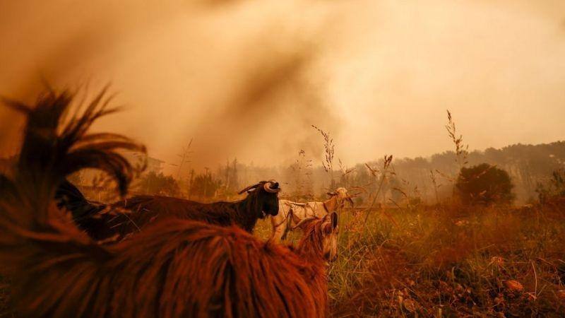 В Турции бушуют лесные пожары: погибло три человека (ФОТО) - фото №6