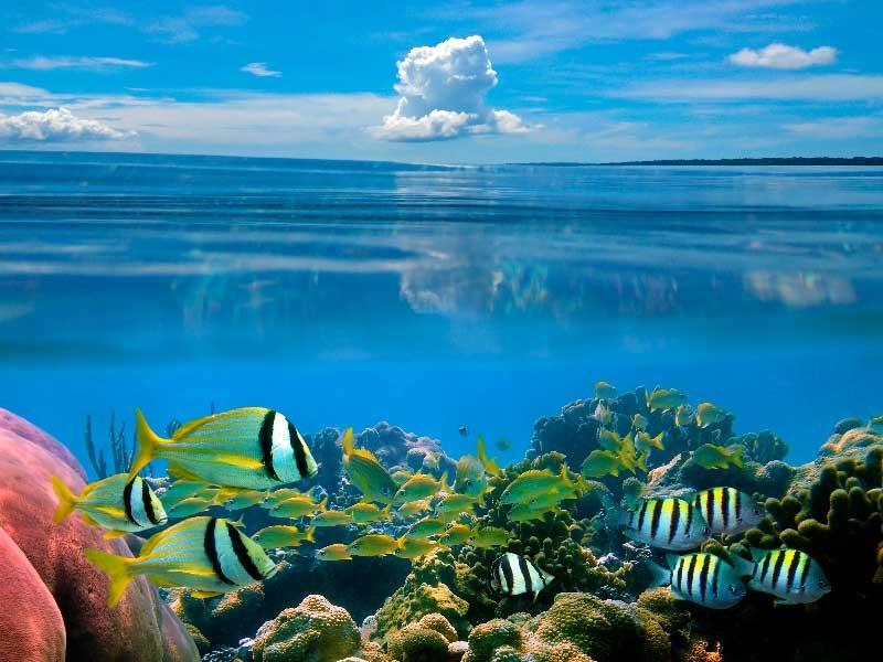 Всемирный день океанов: подборка самых ярких фото - фото №2