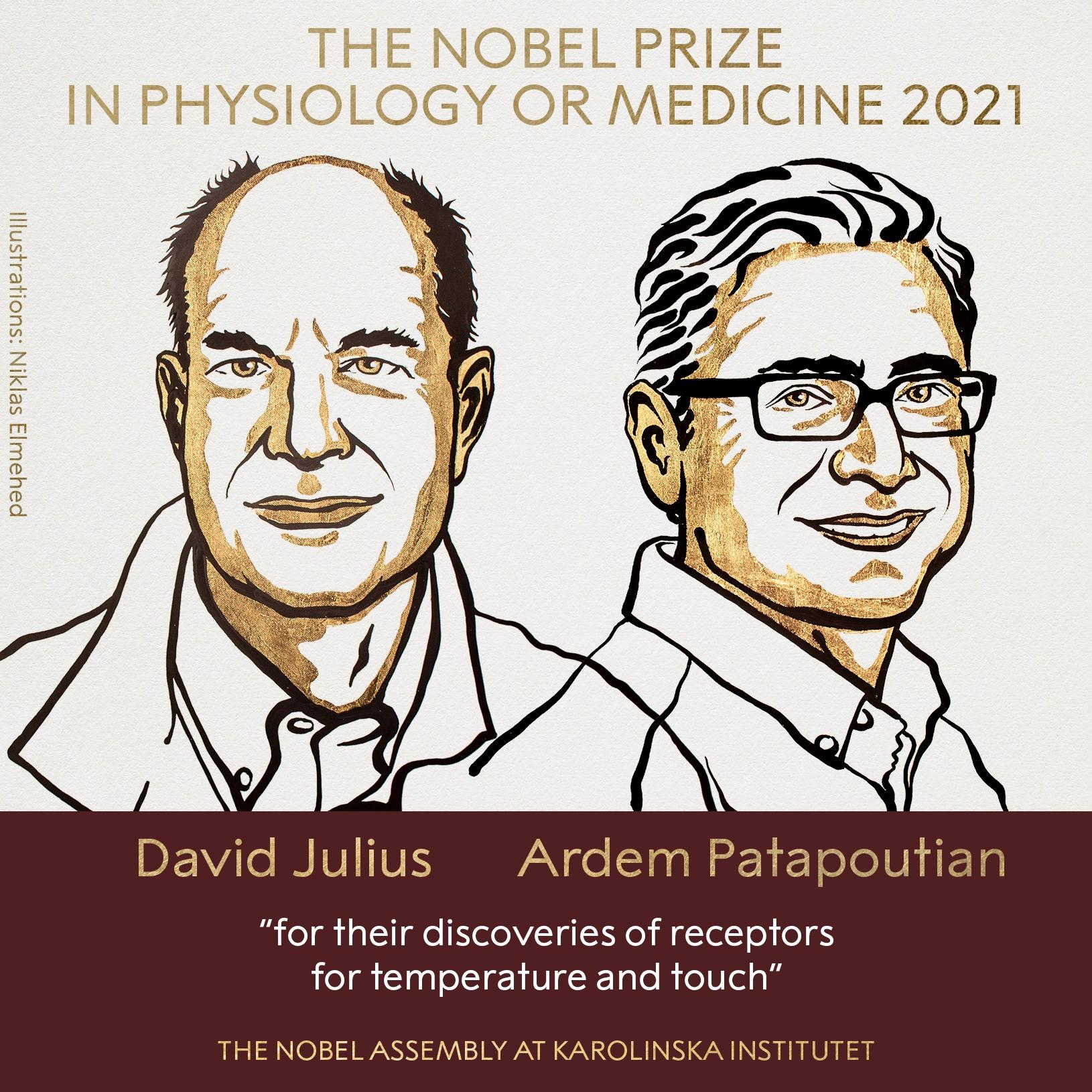 Нобелевская премия 2021: стали известны имена лауреатов в области физиологии и медицины - фото №1