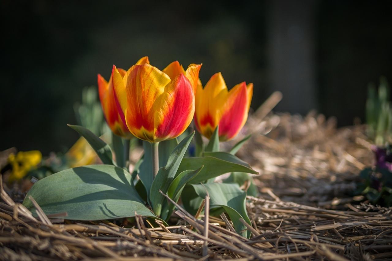 праздник сегодня 28 марта