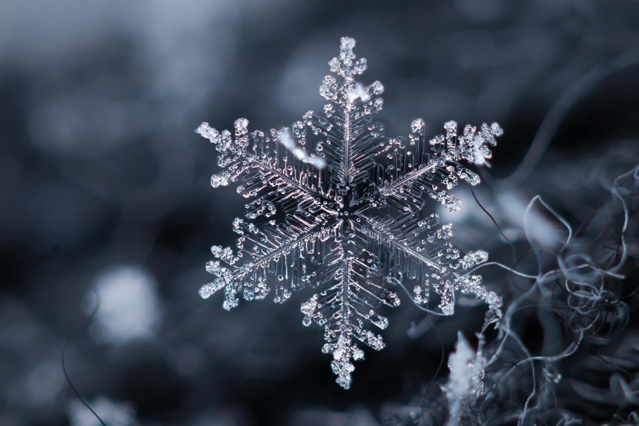 картинки с первым днем зимы