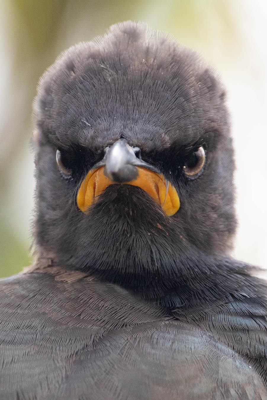 Comedy Wildlife Photography Awards опубликовала самые комичные фото животных - фото №15