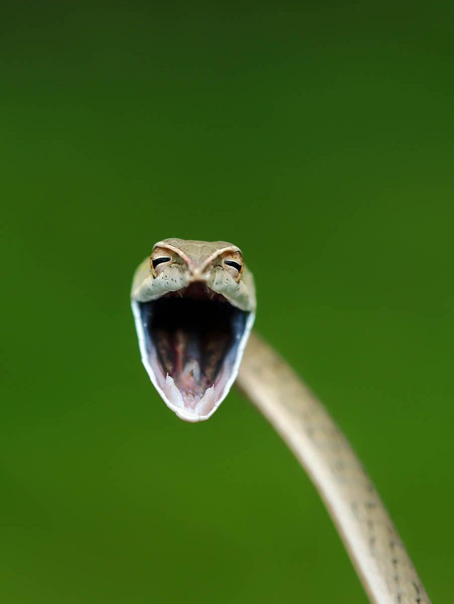 Comedy Wildlife Photography Awards опубликовала самые комичные фото животных - фото №10