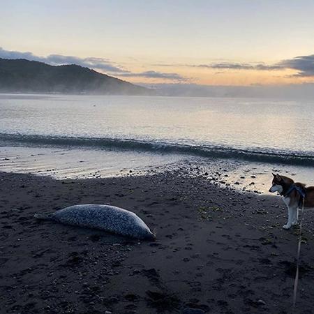 Экологическая катастрофа на Камчатке: ученые сообщили о гибели 95% морских организмов в Авачинской бухте - фото №5