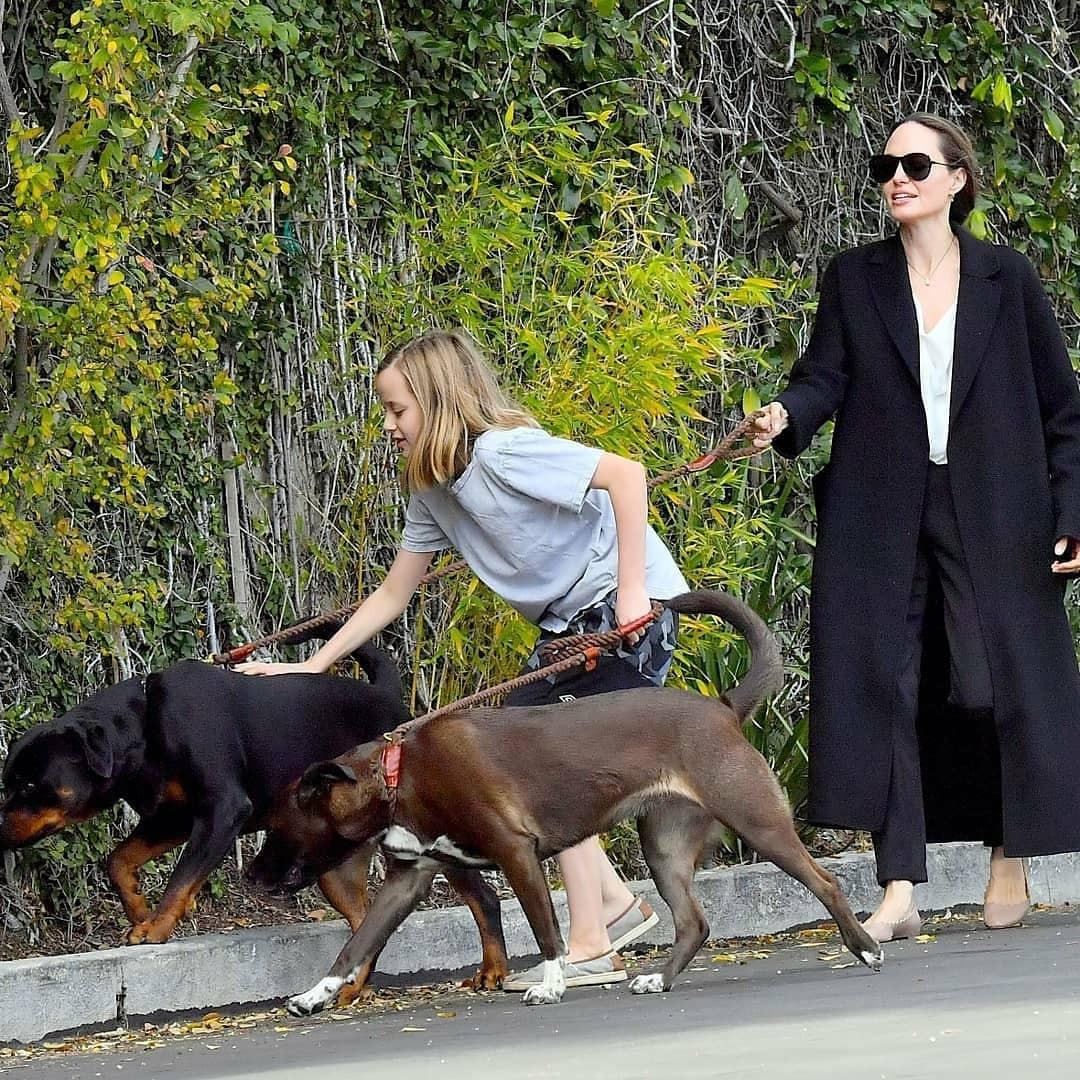 """""""Кто кого выгуливает?"""": новые фото Анджелины Джоли вызвали осуждения поклонников - фото №2"""