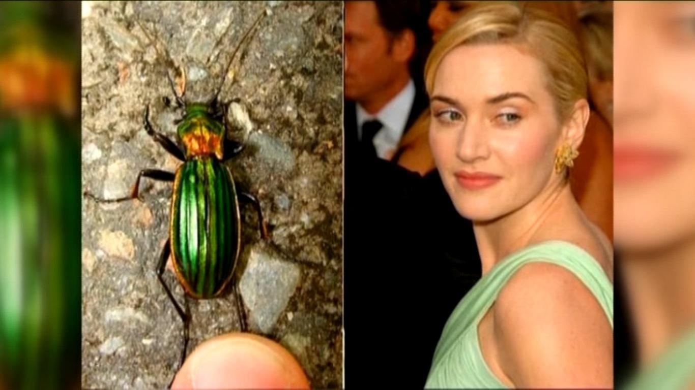 кейт уинслет жук