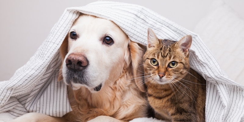 В Южной Корее домашних животных будут тестрировать на коронавирус - фото №2