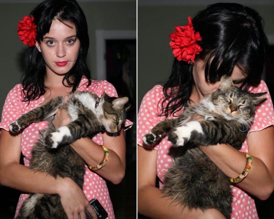 Кэти Перри с котом