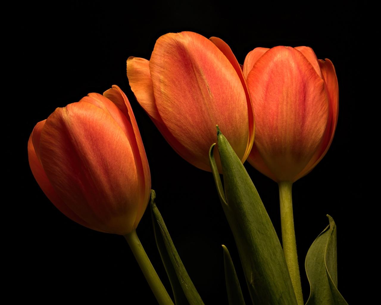 церковный праздник сегодня 7 марта