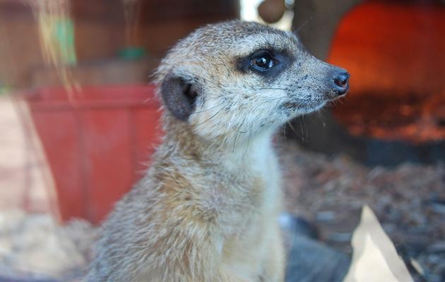 Зоопарки на карантине: как проходит жизнь у животных и скучают ли они по посетителям (ФОТО) - фото №3