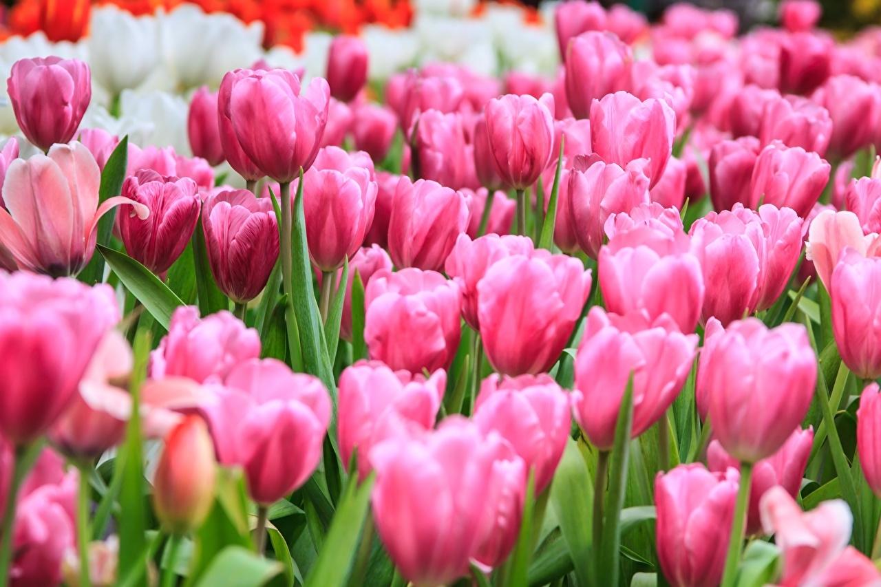 праздник сегодня 7 марта