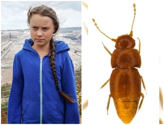 гретта жук