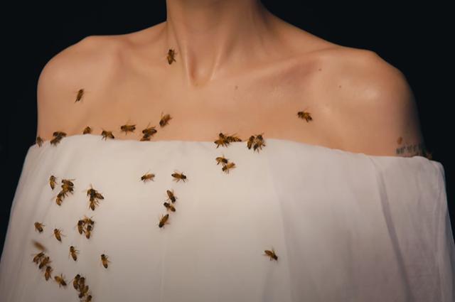анджелина джоли пчелы