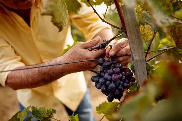 Винная дипломатия: в Украине впервые пройдет Wines of Portugal Grand Tasting 2021 - фото №1