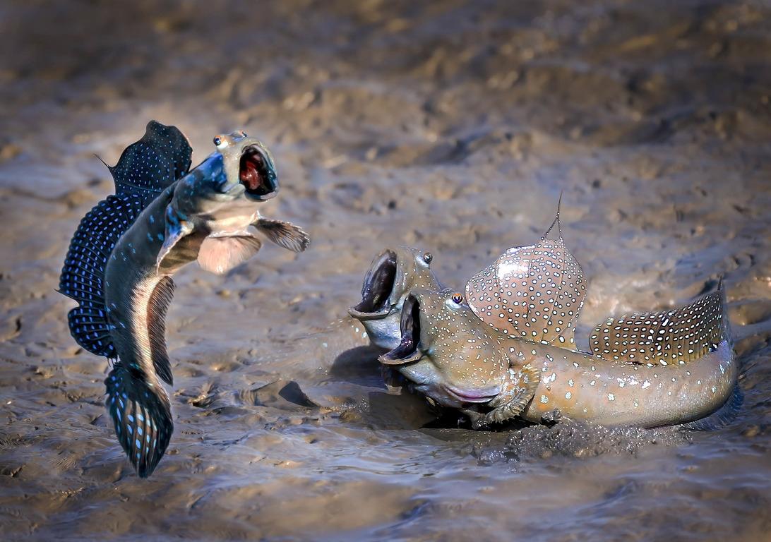 Comedy Wildlife Photography Awards опубликовала самые комичные фото животных - фото №8