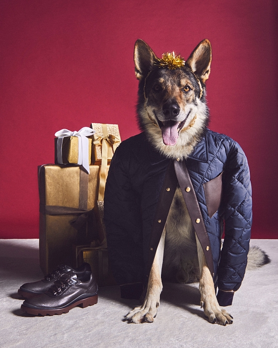 Слишком мило: главными героями рождественской рекламы Tod's стали собаки (ФОТО) - фото №3