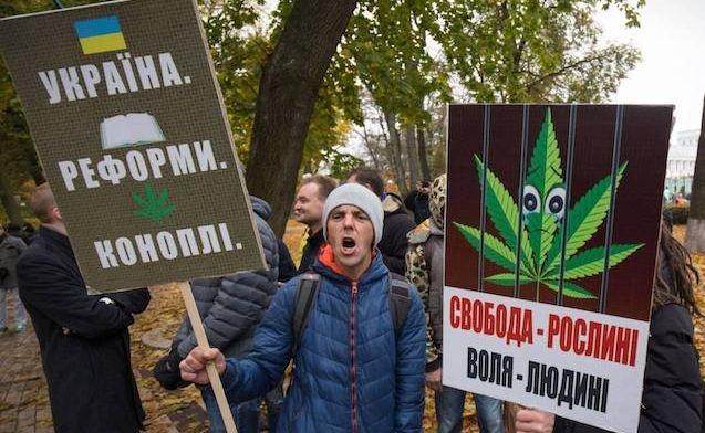 В Украине легализировали медицинский каннабис - фото №2