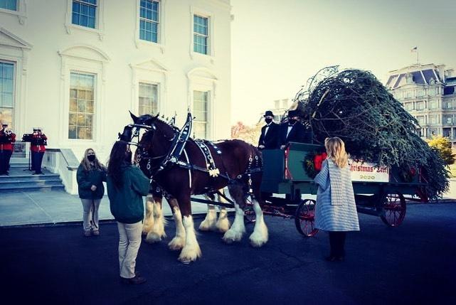 рождественская ель в белом доме 2021