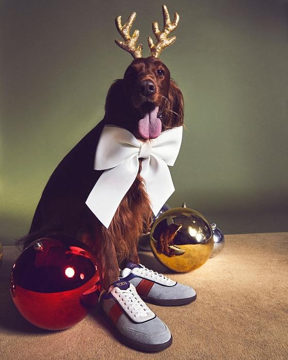 Слишком мило: главными героями рождественской рекламы Tod's стали собаки (ФОТО) - фото №1