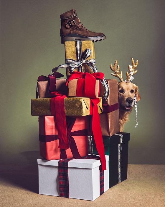 Слишком мило: главными героями рождественской рекламы Tod's стали собаки (ФОТО) - фото №4