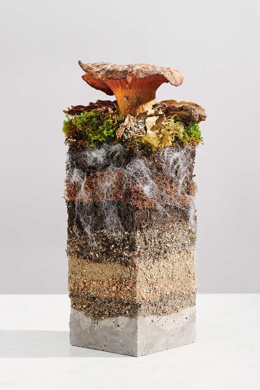 Новый тренд осени 2020 года — экокожа из грибов. Что нужно знать об этом (ФОТО) - фото №1